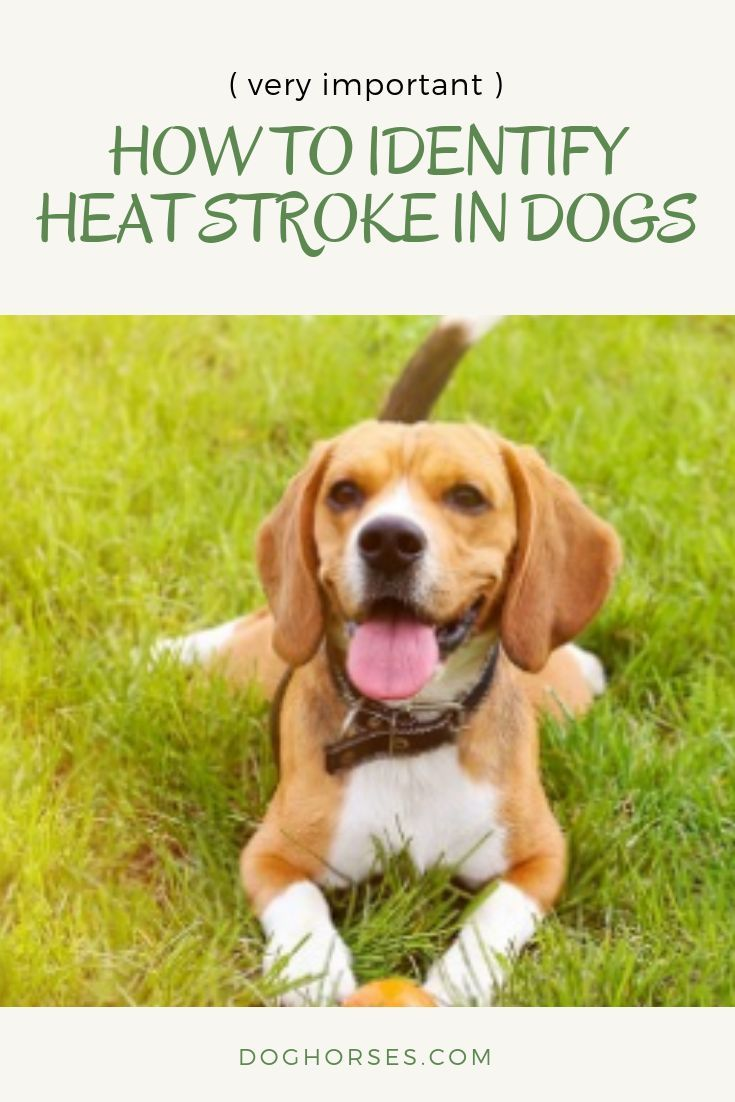 Dogs temperature and health