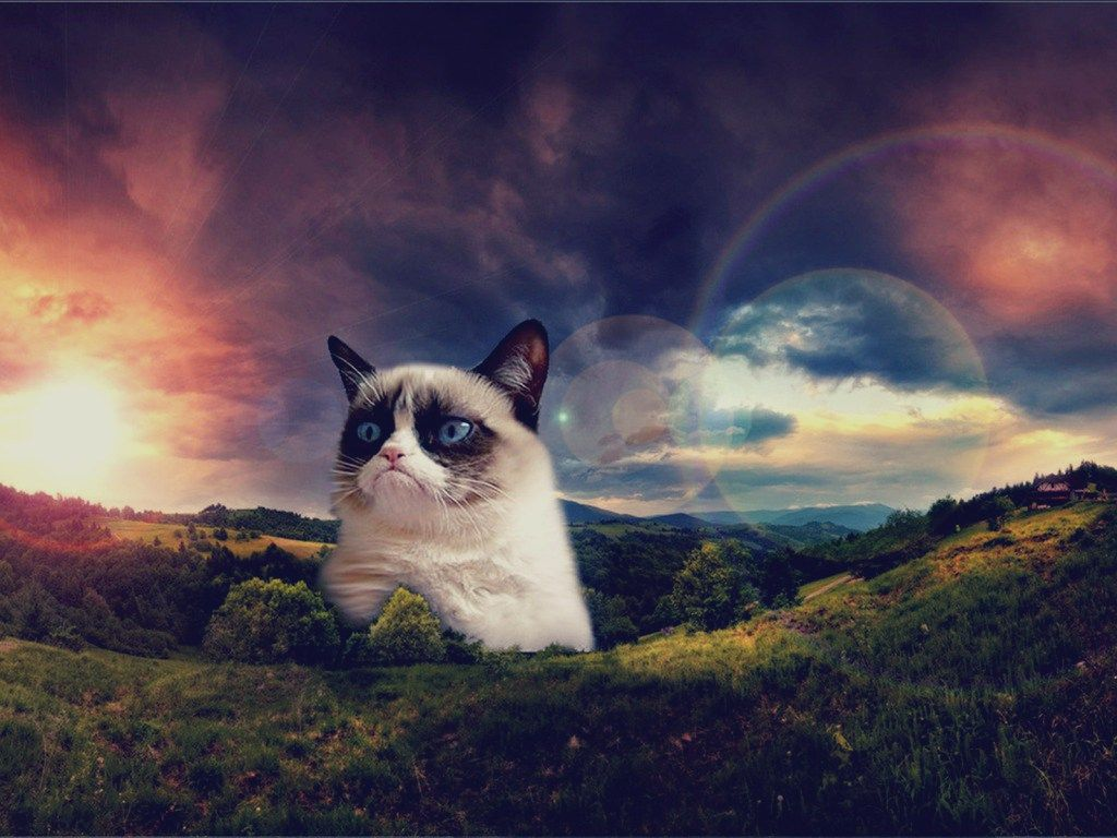 Get Your Grumpy Cat Wallpaper