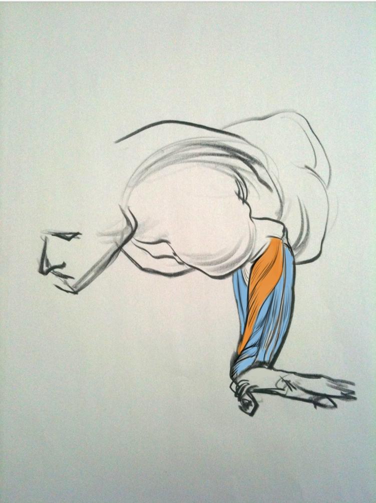 http://www.drawingforce.com/ | Anatomy | Pinterest | Dibujo y Arte