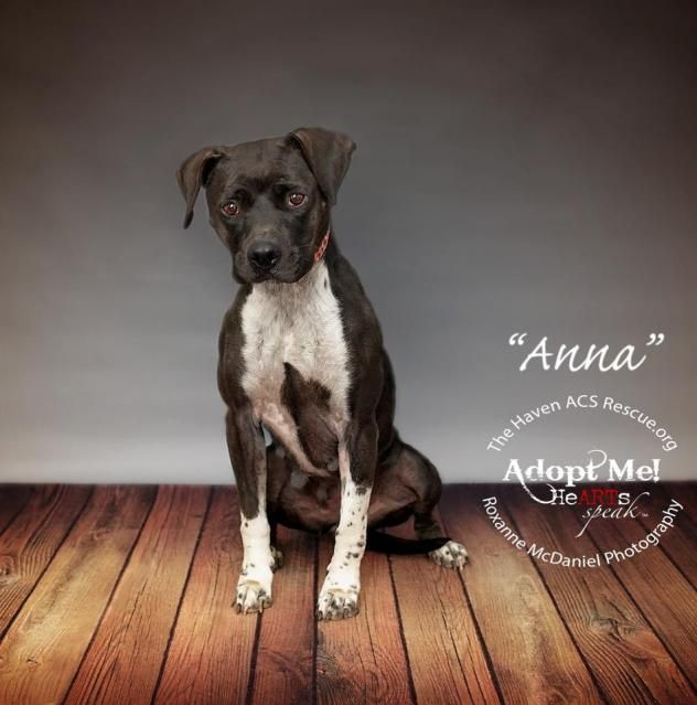 Adopt Anna On Adoption Homeless Pets Pet Adoption