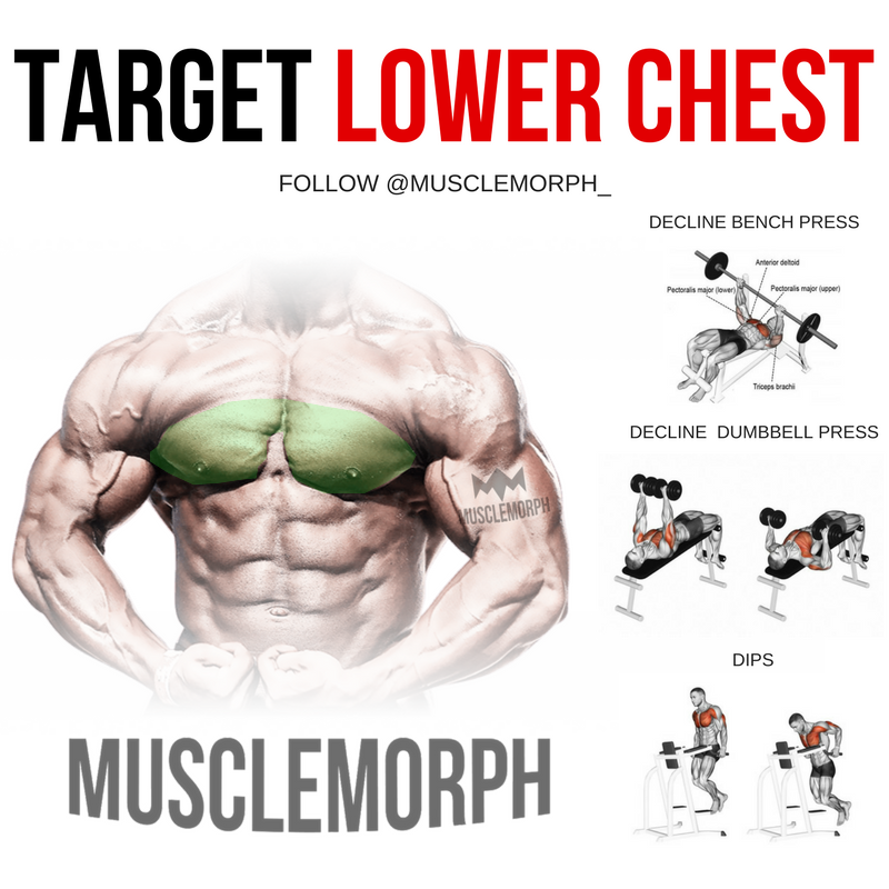 Pin by Rober on Fitness   Chest workouts, Lower chest