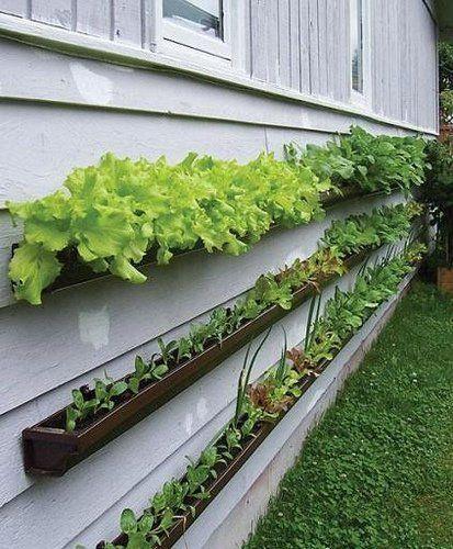 10 Ideas For Tiny Balconies Gutter Garden Vertical Garden Backyard
