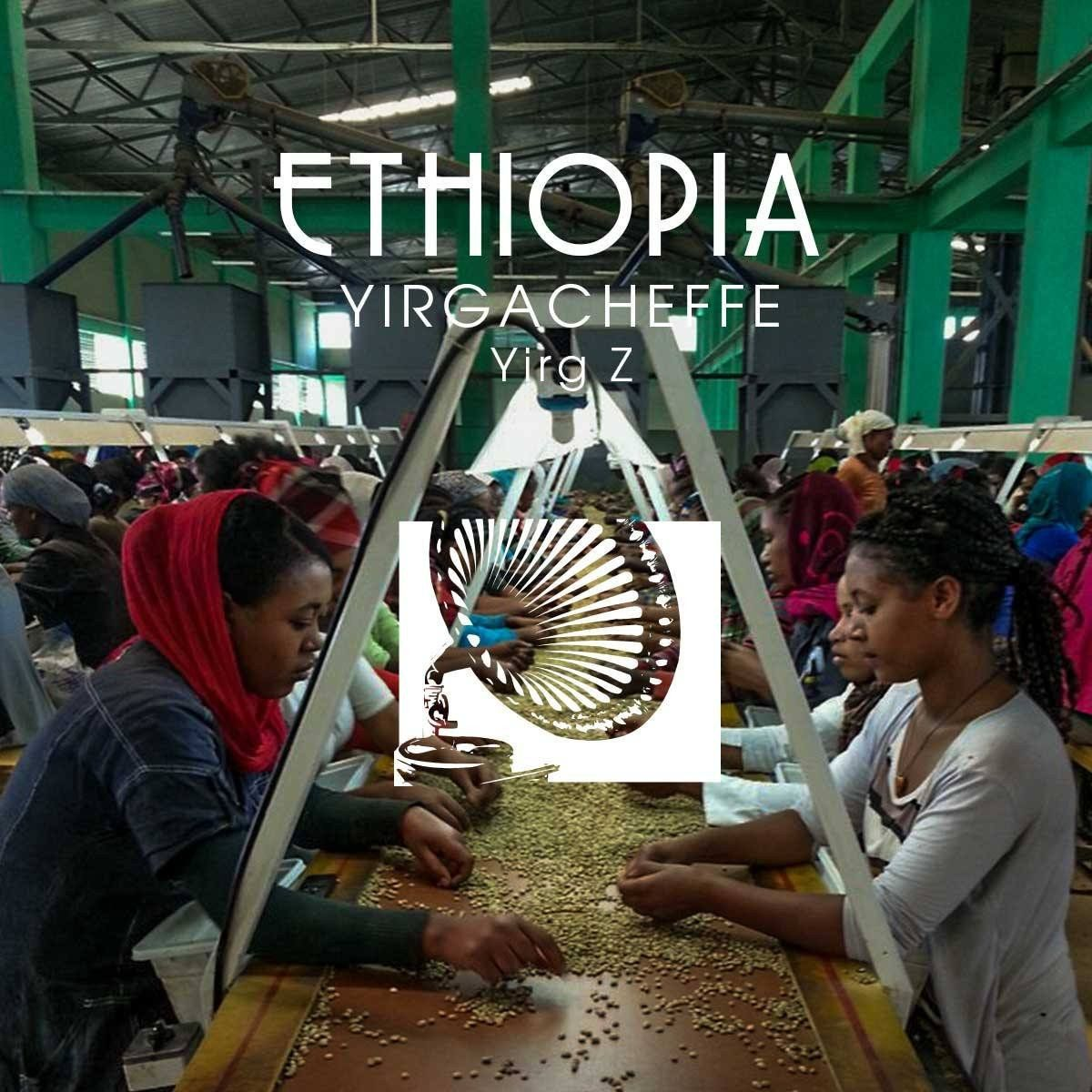 Ethiopia yirgacheffe yirgz in 2019 coriander seeds