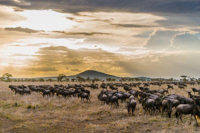 Serengeti National Park – The Unbiased Safari Guide #naturallandmarks