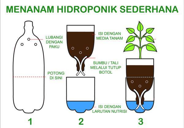 Cara Menanam Hidroponik Dengan Botol Bekas Di 2020 Hidroponik Menanam Tanaman