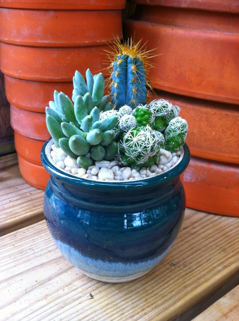 Handmade Pottery Cactus/Succulent  Dripping Springs, Tx. Farmers Market