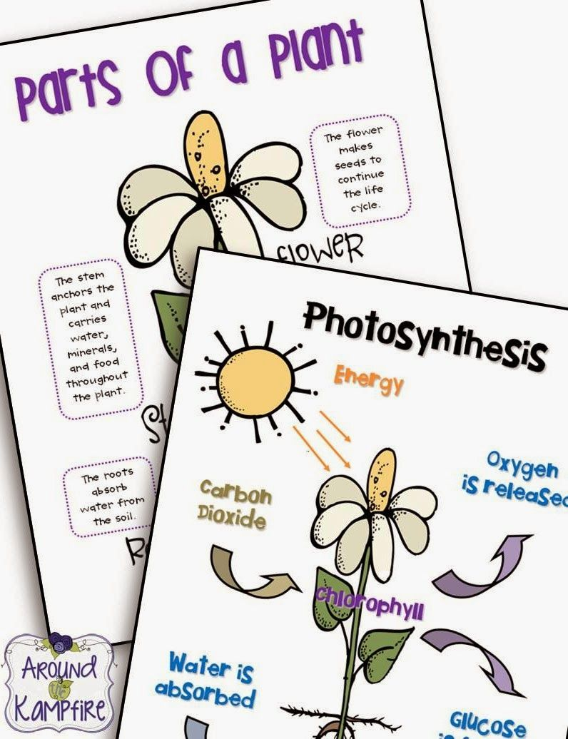 parts of photosynthesis Common misconceptions about plants we've highlighted some common misconceptions about plant classification, plant parts, needs of plants, plant food, and photosynthesis and respiration rather than an exhaustive list.