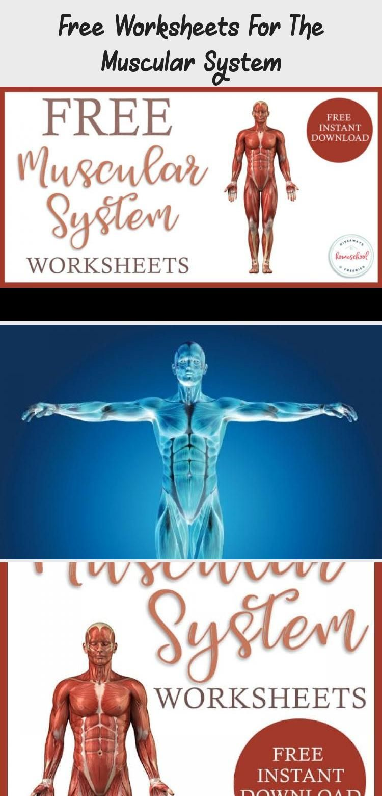 Free Worksheets For The Muscular System Homeschool Giveaways Educationsciencehumanbody Muscular System Body Systems Worksheets Human Body Systems