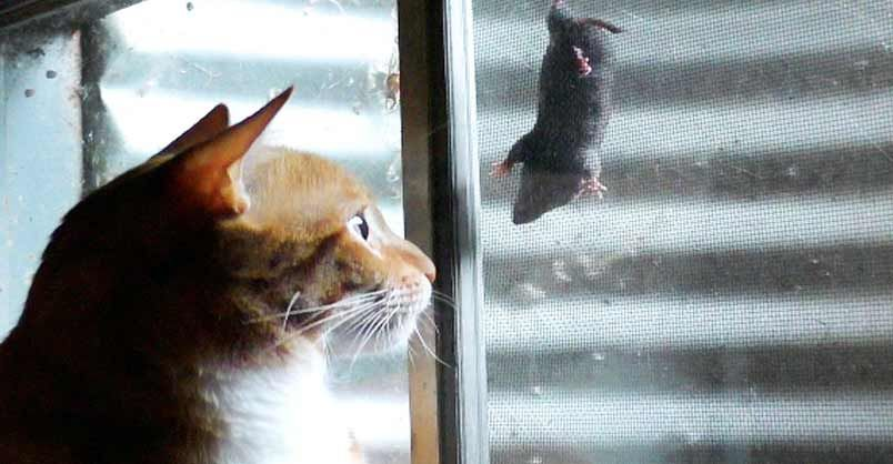 It S A Cat And Mouse Game We Love Cats And Kittens Dog Cat Pictures Cats Cool Cats