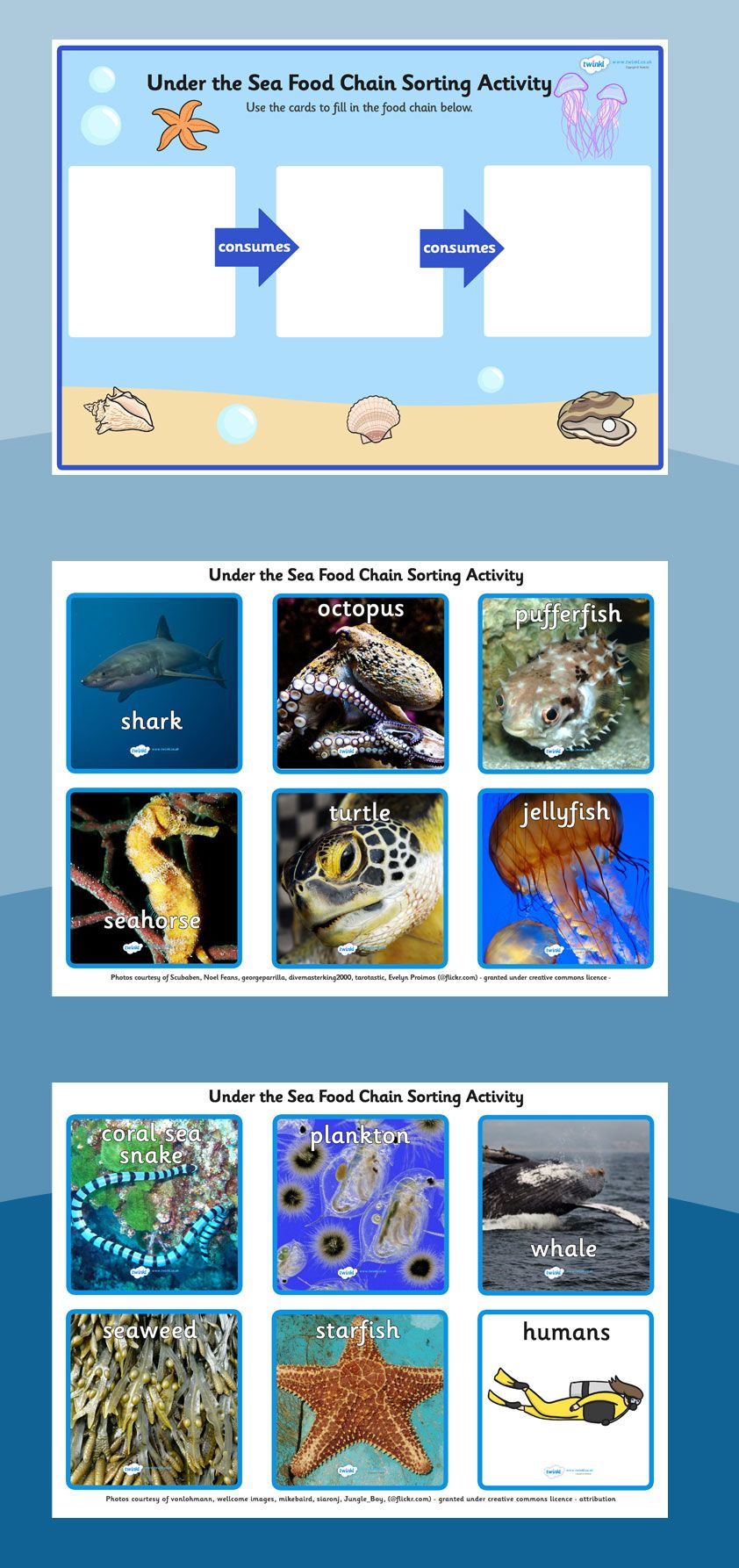 Food chains Under the sea food chain sorting activity