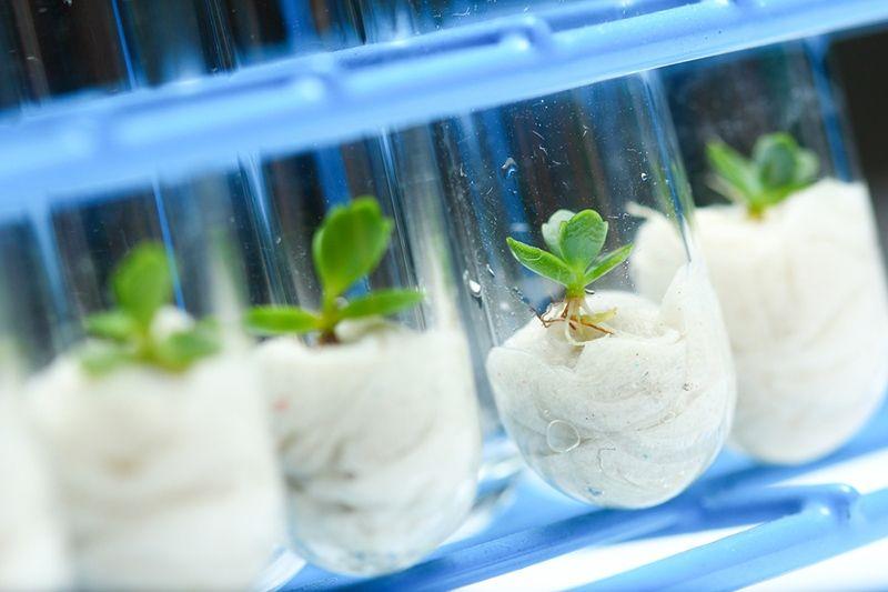 Plant Tissue Culture Internships