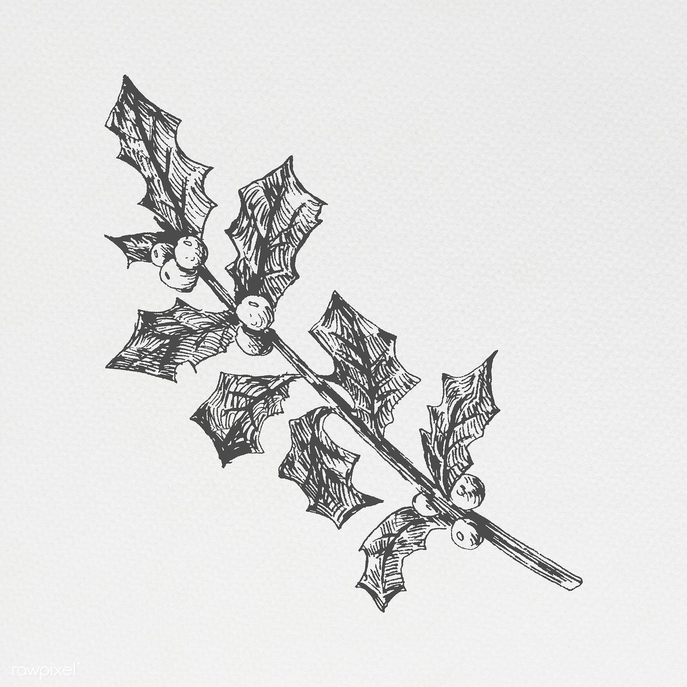 Download premium illustration of Hand drawn holly branch