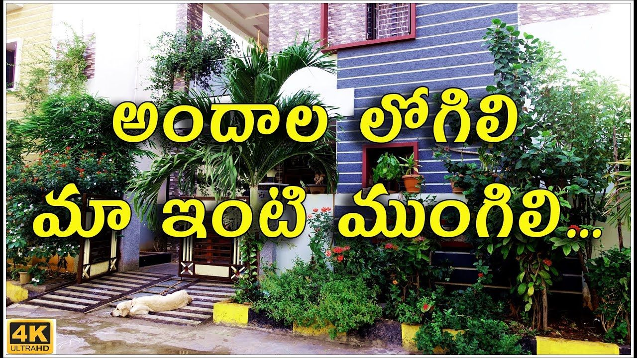 Pin on Gardening tips in tamil