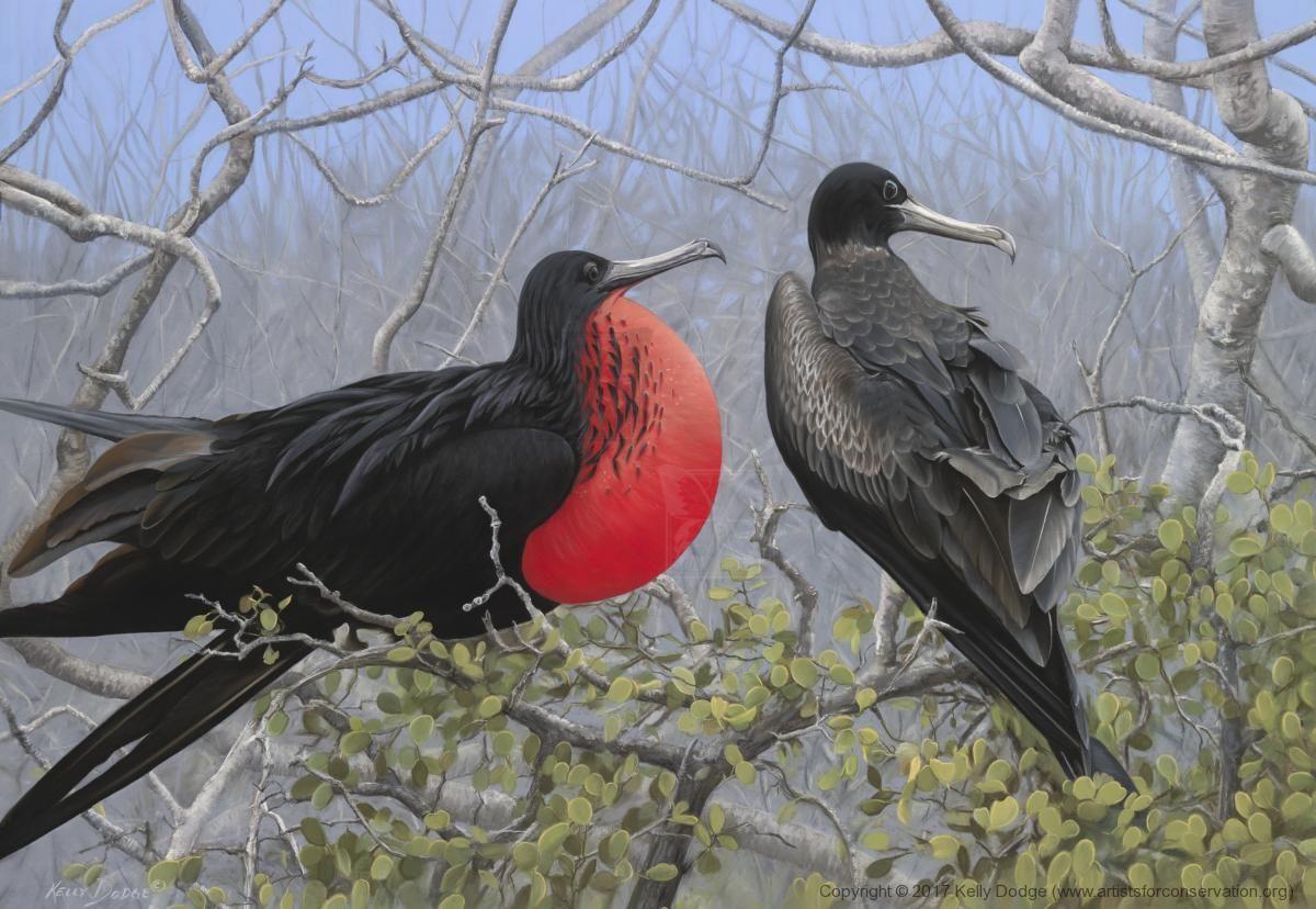 Edit Artwork Wallhanging By Kelly Dodge Artists For Conservation Wildlife Art Bird Artwork Pet Birds