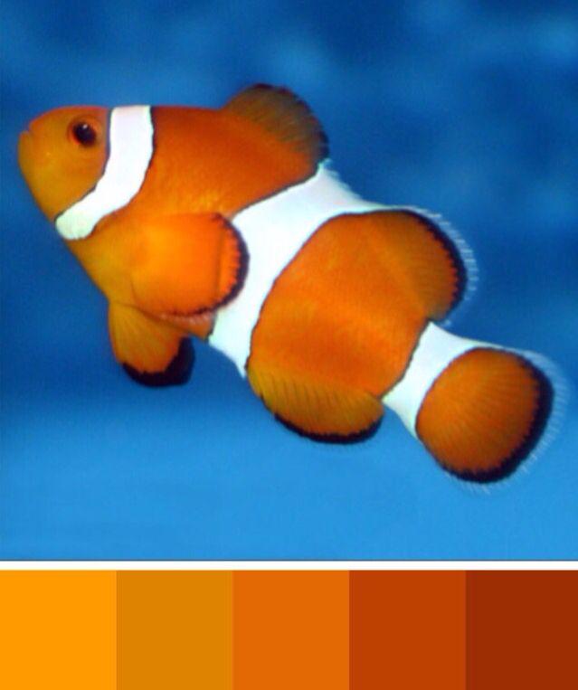 clownfish color palette orange yellow pinterest