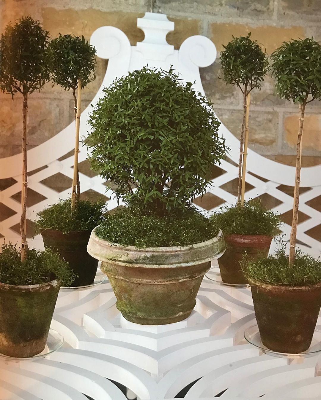 Pin By Jodi On ~Topiaries & Boxwoods~