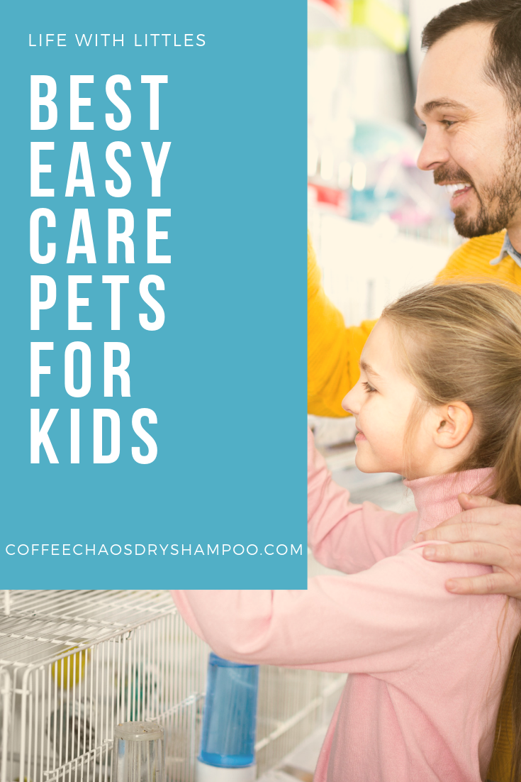 6 Low Maintenance Pets That Are Easy To Care For Both Moms And Kids Will Love This List Low Maintenance Pets Animals For Kids Pets