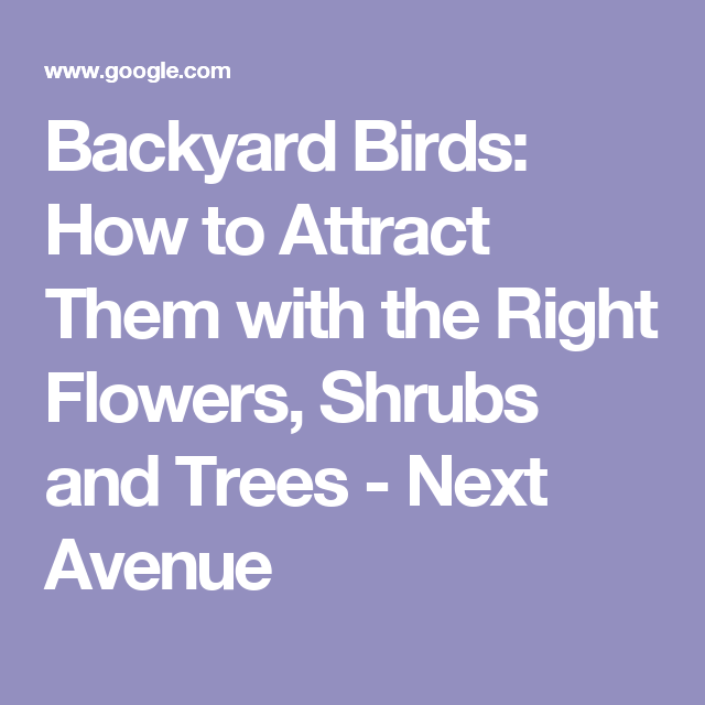 Backyard Birds: How To Attract Them With The Right Flowers