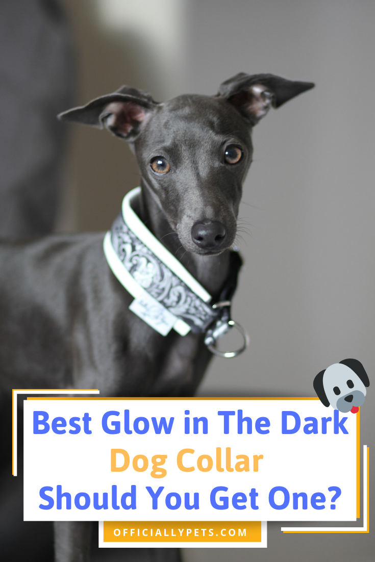 Best Glow In The Dark Dog Collar Should You Get One Dogs Dog Advice Dog Mom Gifts