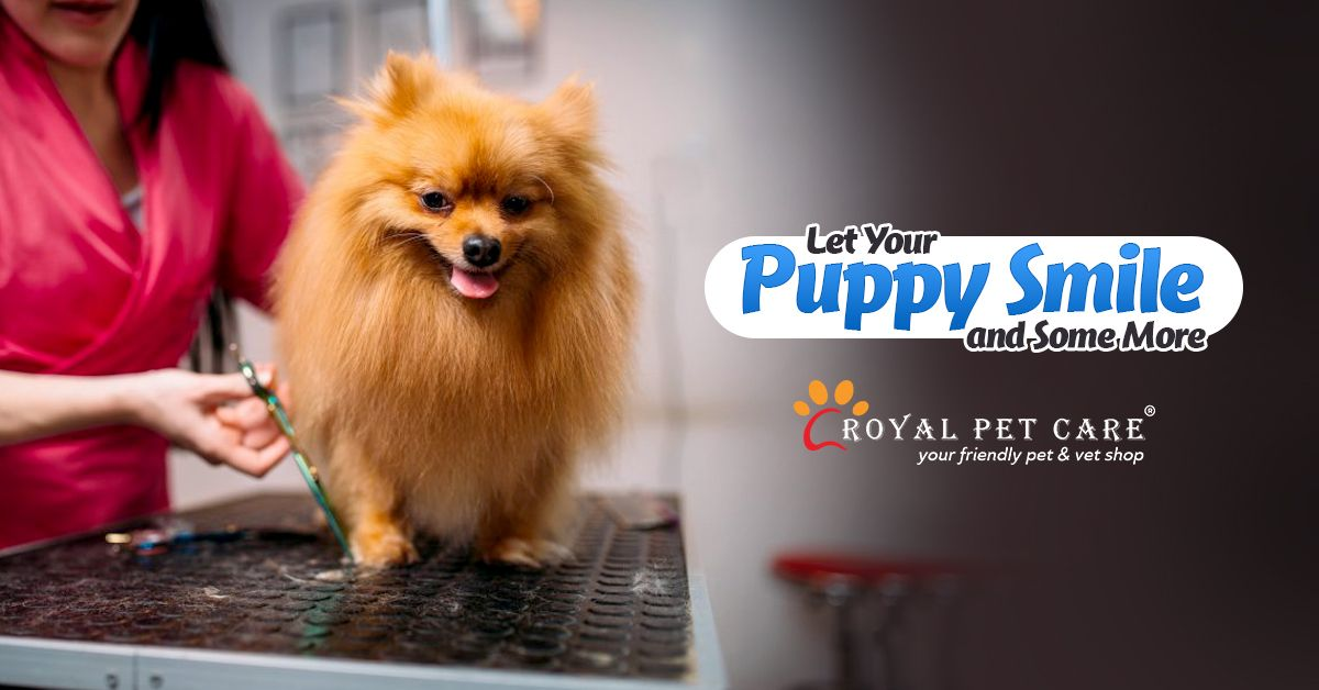 Puppies Usually Do Not Speak They Cuddle Let Their Hug Be Warmer And More Delightful By Bringing Them To Our Grooming Dog Boarding Near Me Pet Care Paw Care