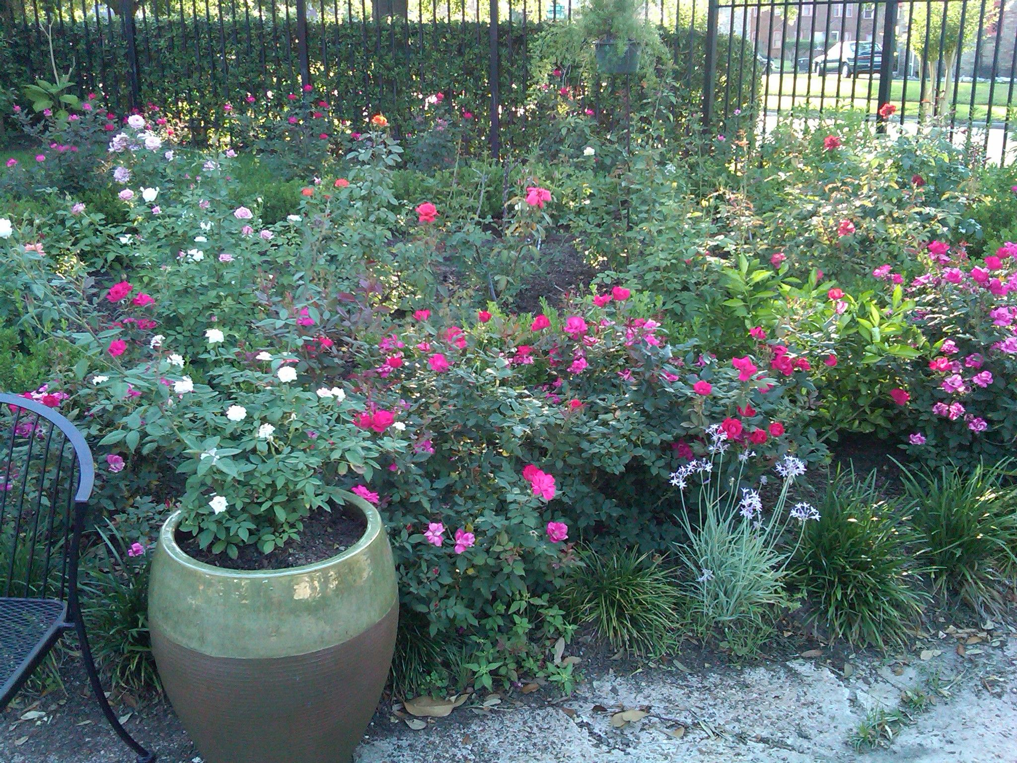 I love my garden - every day I visit the flowers and tend to them -- keeps me grounded.