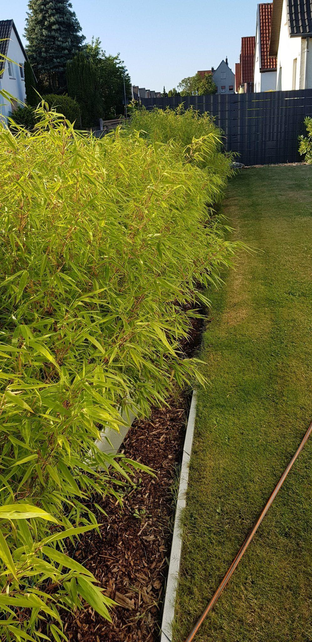 Gartenpflege – Wie wo wann was