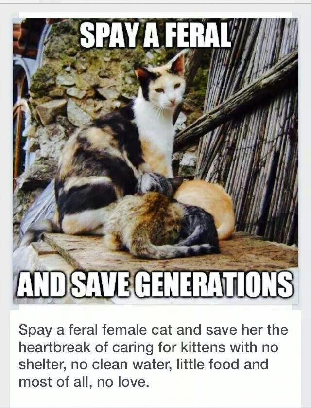 LowCost Spay/Neuter Programs Feral cats, Cats, Crazy cats