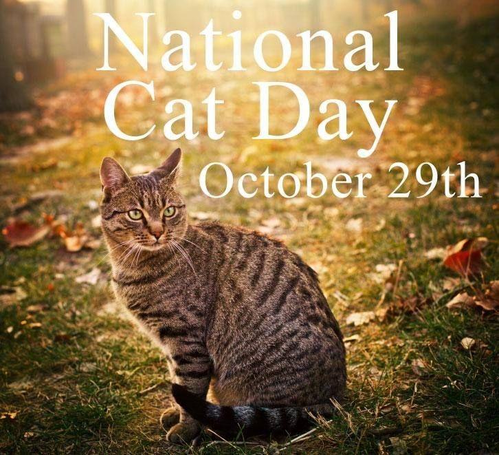 5665360e9783b8d4e1baabe7471c77c2 it is cat day every day at my house! xoxo cats pinterest cat