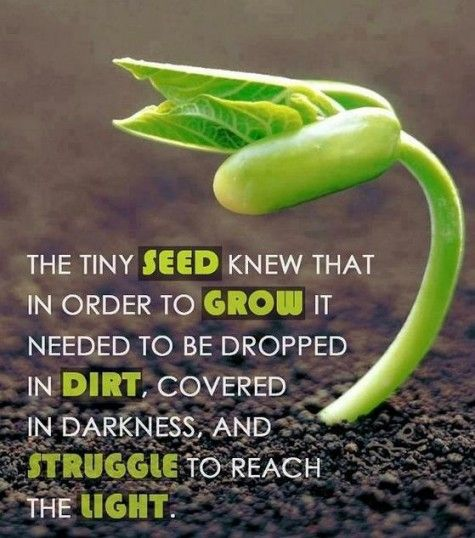 """the tiny seed knew that in order to grow it needed to be dropped in dirt, covered in darkness, and struggle to reach the light."""
