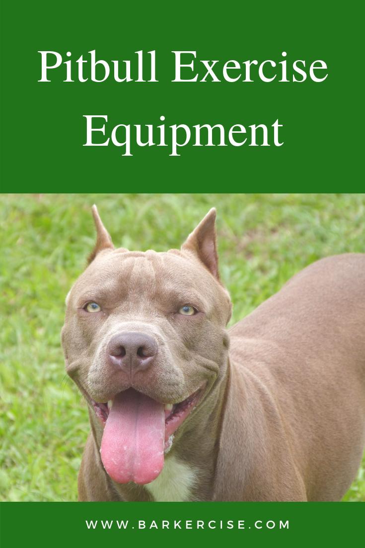 Pitbull Exercise Equipment Pitbull Muscle Building Equipment Pitbull Conditioning Pitbulls American Pitbull Terrier Dog Exercise