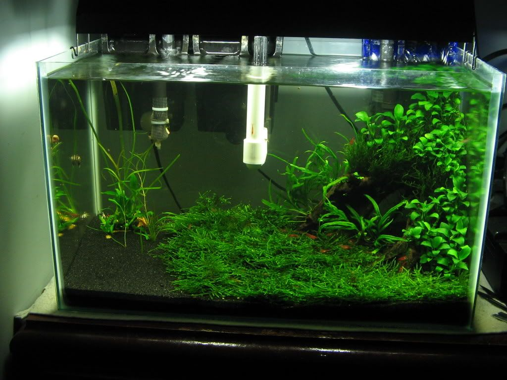 How To Make Java Moss Into A Carpet Fish Tank Aquarium Fish Tech Tank