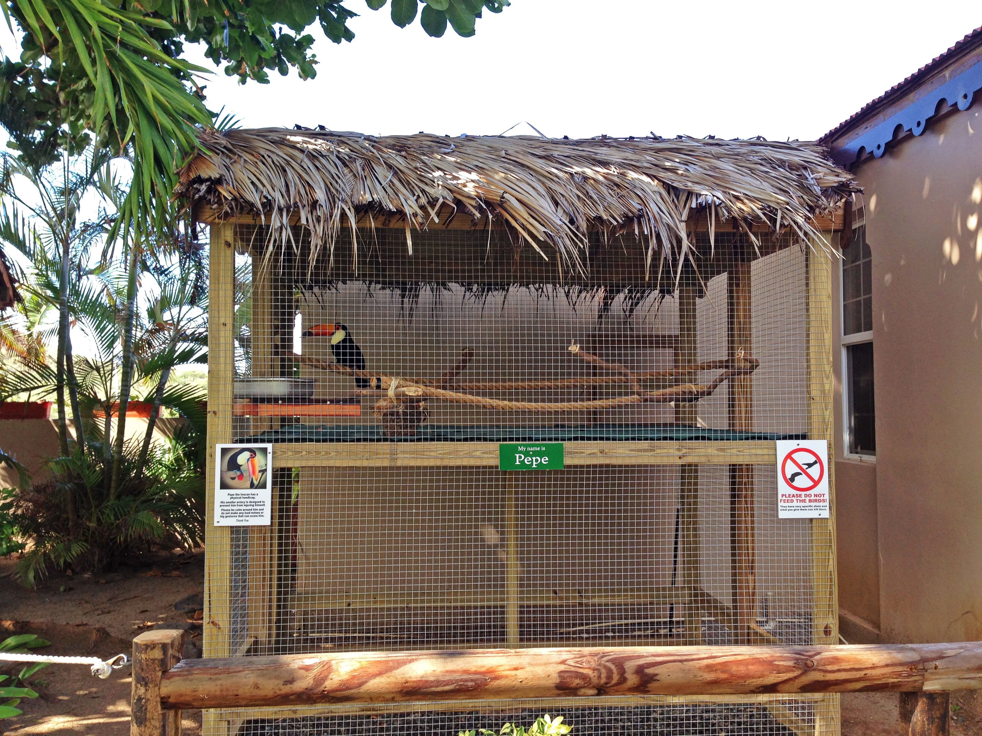 c5a5771ef outdoor parrot aviary plans. outdoor parrot aviary plans Bird Aviary,  Catio, Pet Birds, Coops, Bird Cages