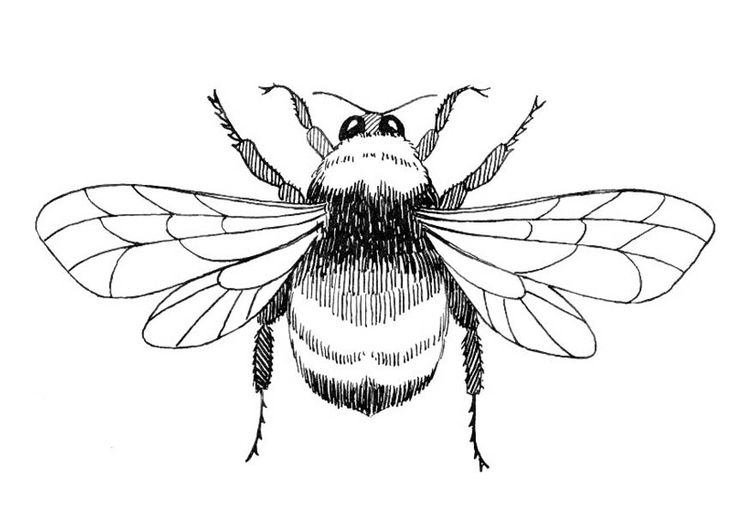 Coloring Page Bumblebee Img 18752 Bee Coloring Pages Bee Outline Pyrography Patterns