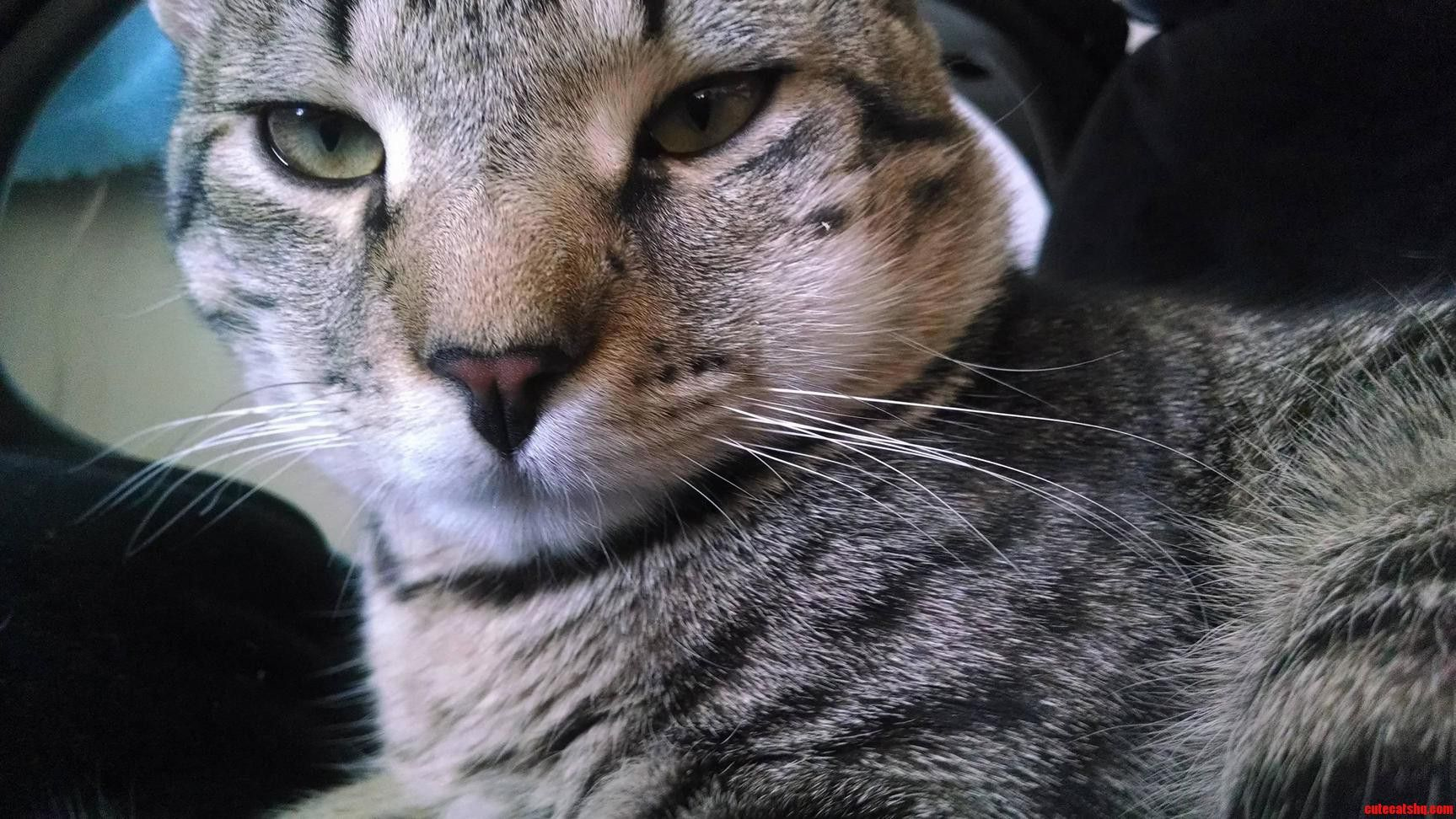 Link Got Stung By A Bee Too. Cute cats, kittens, Cute