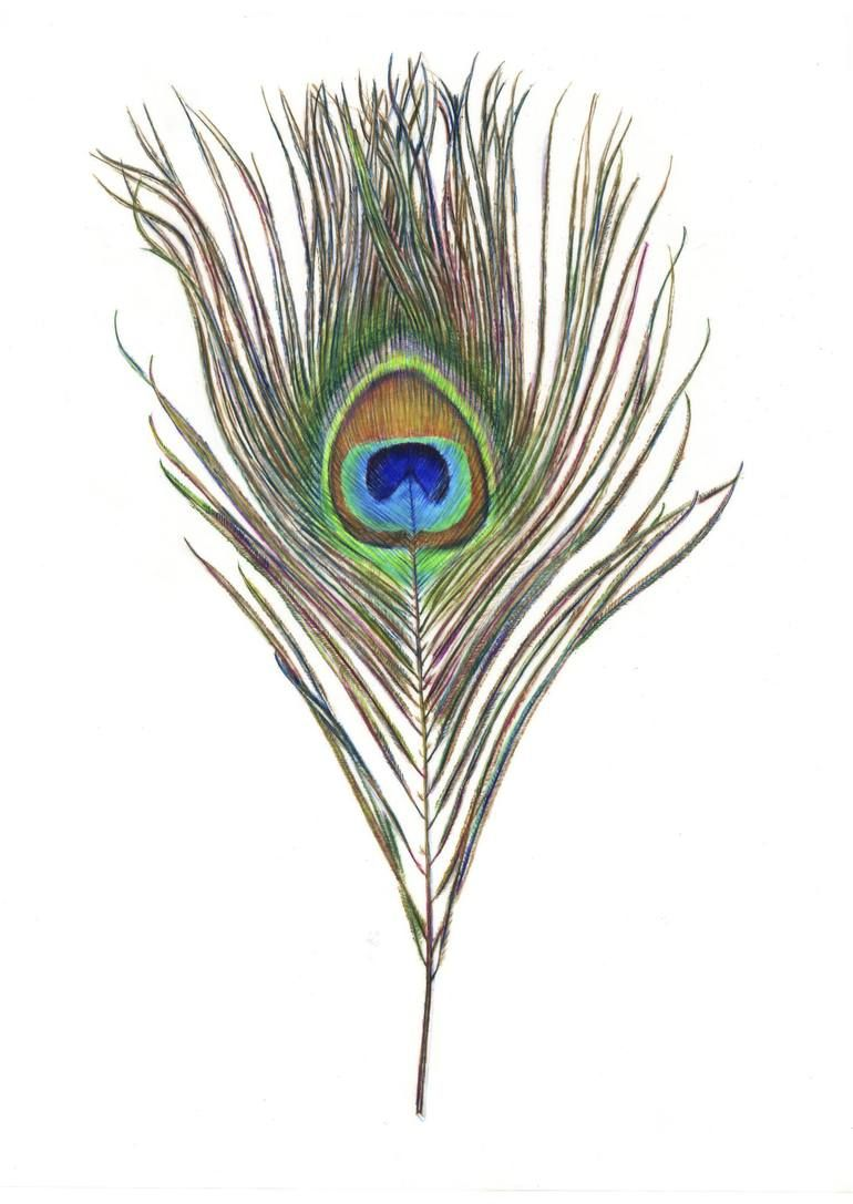 Pin by Shivajisa on ask in 2019 | Peacock drawing, Feather ...
