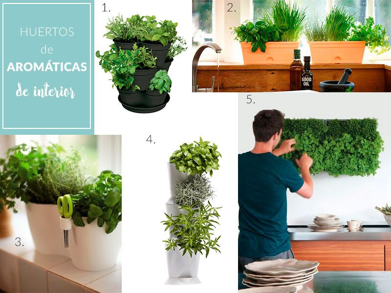Manual De Supervivencia Para Aromáticas Del Supermercado Plantea En Verde Blog Cultivar Hierba Cultivo De Plantas Cultivar