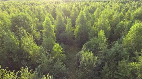 81+ Drone Footage Forest