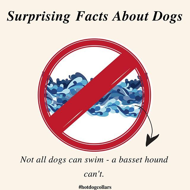 Interesting Fact Not All Dogs Can Naturally Swim