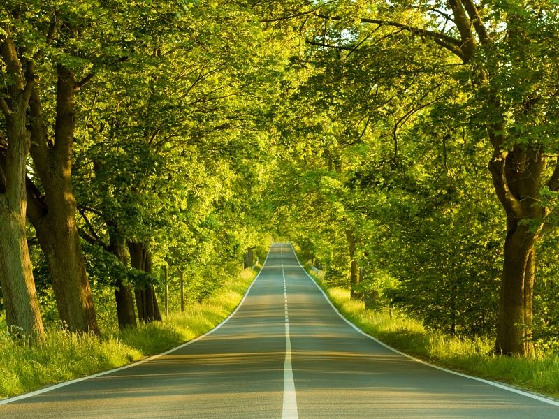 Lonely Road xHD Wallpaper on MobDecor http://www.mobdecor.com/b2b/wallpaper/219666_lonely_road