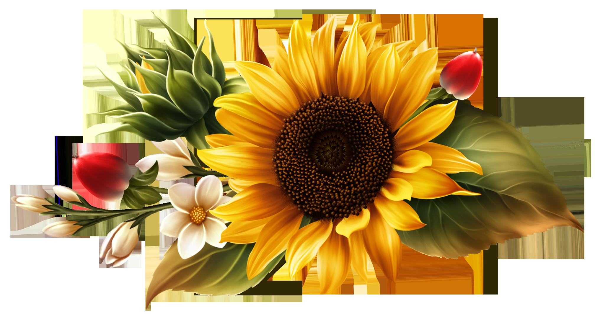Bright Yellow Sunflower | Sunflower art, Sunflower drawing ...
