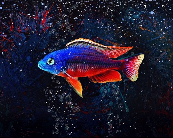 Red Empress African Cichlid By Scott Wallace Digital Designs In 2020 African Cichlids Digital Design Artwork