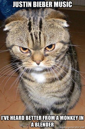 Kitty In A Blender ~ Cat in a blender heard better from monkey