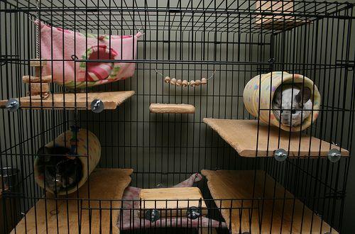 Chinchilla Beds Chinchilla Beds Chinchilla Care Chinchilla Pets
