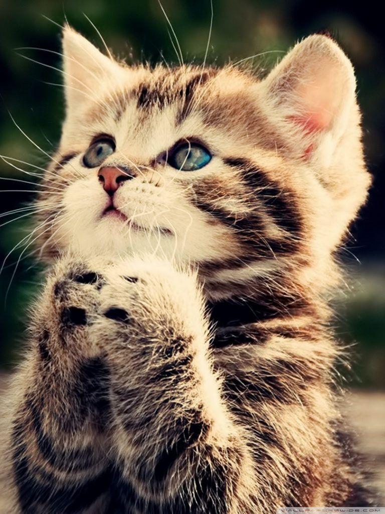 Cat Hd Desktop Wallpaper For 4k Ultra Hd Kittens Cutest Cute Animals Kitten Wallpaper