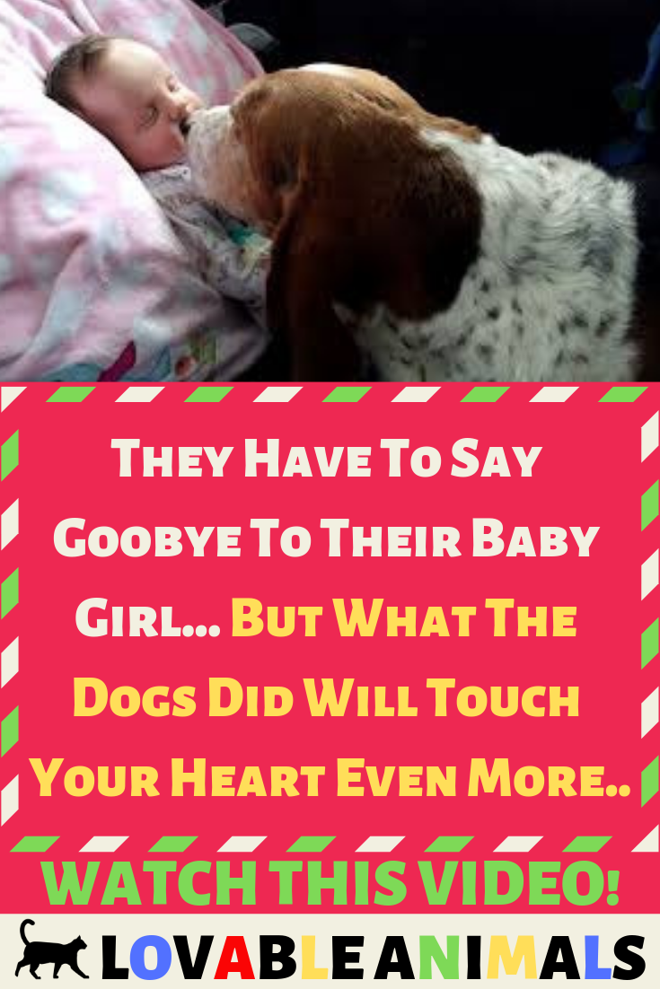 They Have To Say Goobye To Their Baby Girl But What The Dogs Did Will Touch Your Heart Even More Dogs What Dogs Sayings