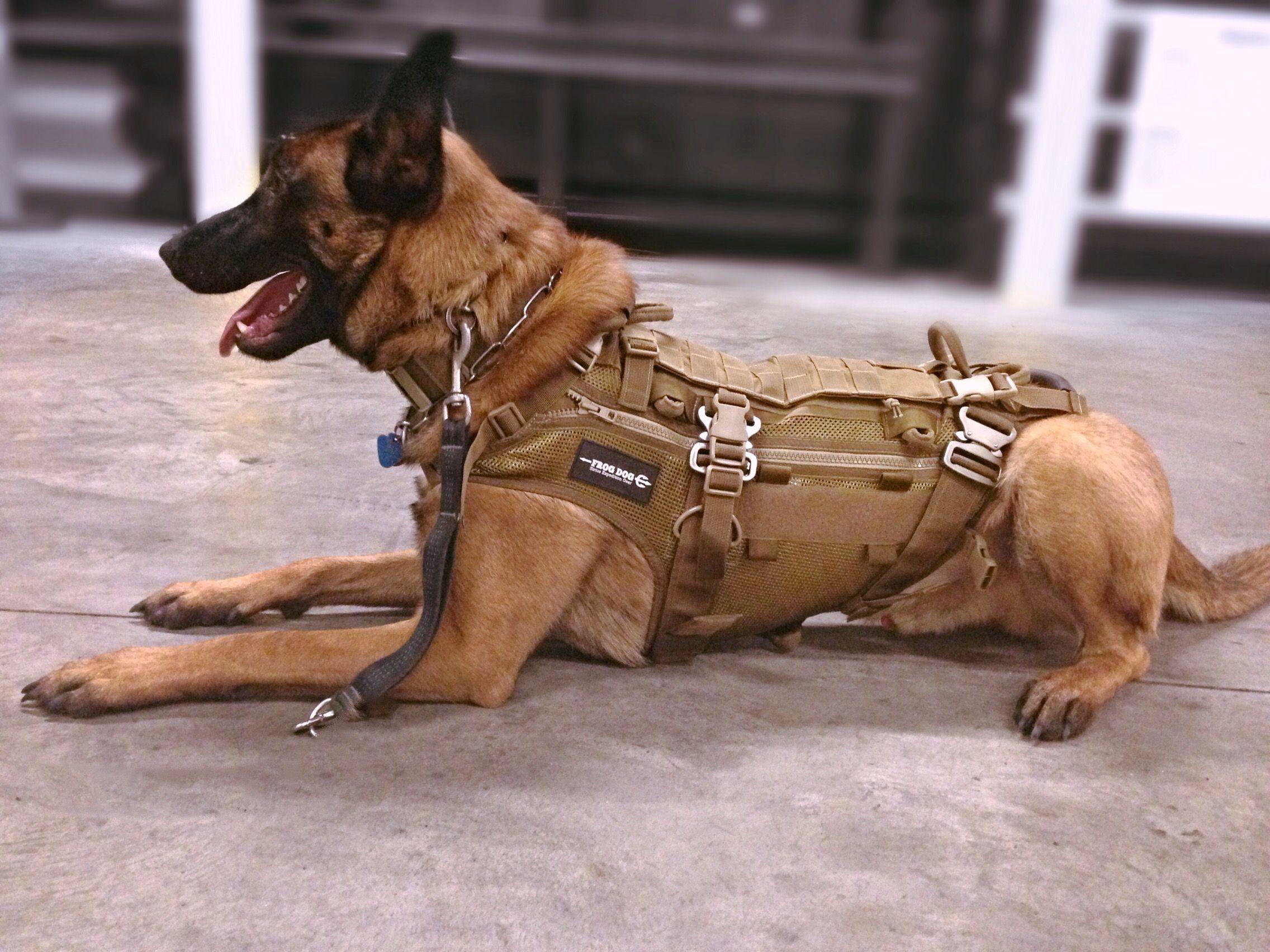 Frog Dog Modular Patrol Vest K9 Dogs Military Dogs En