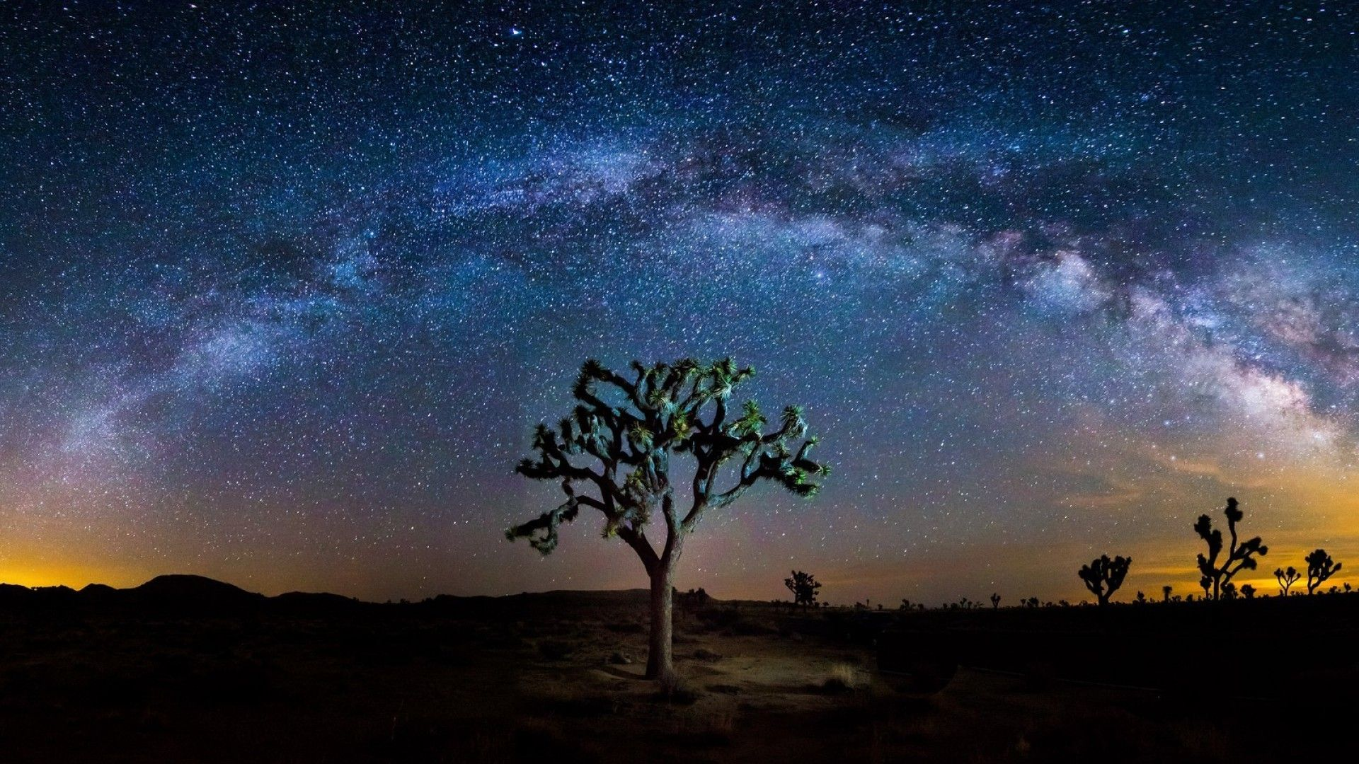 Just another starry night in Joshua Tree.
