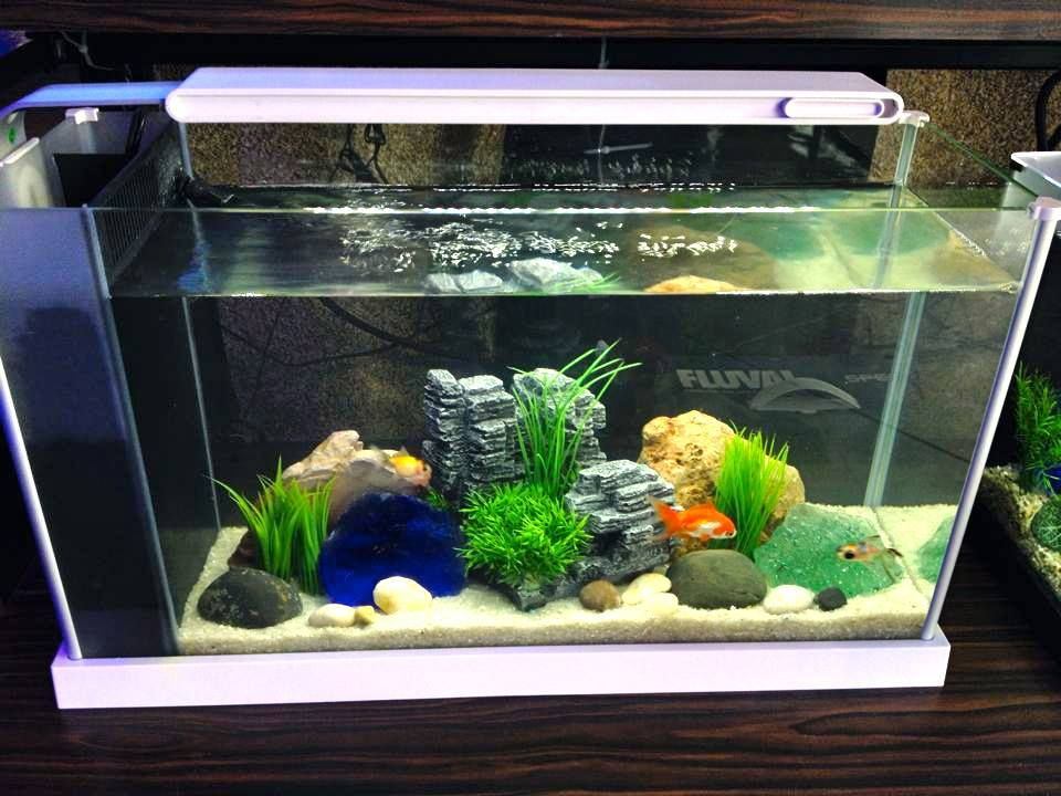 Relax with this 5 gallon freshwater aquarium from picasso for Freshwater fish tank ideas