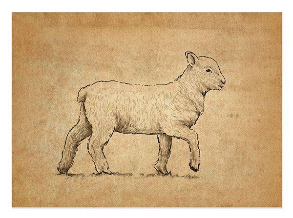 Vintage Lamb Illustration On Behance Sheep Tattoo Sheep Illustration Lamb Drawing