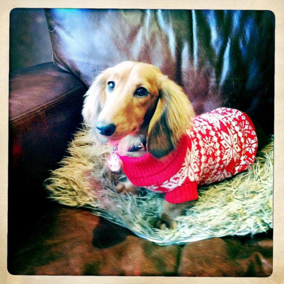 Size Large Traditional fair isle knitted dog sweater in snowflake ...